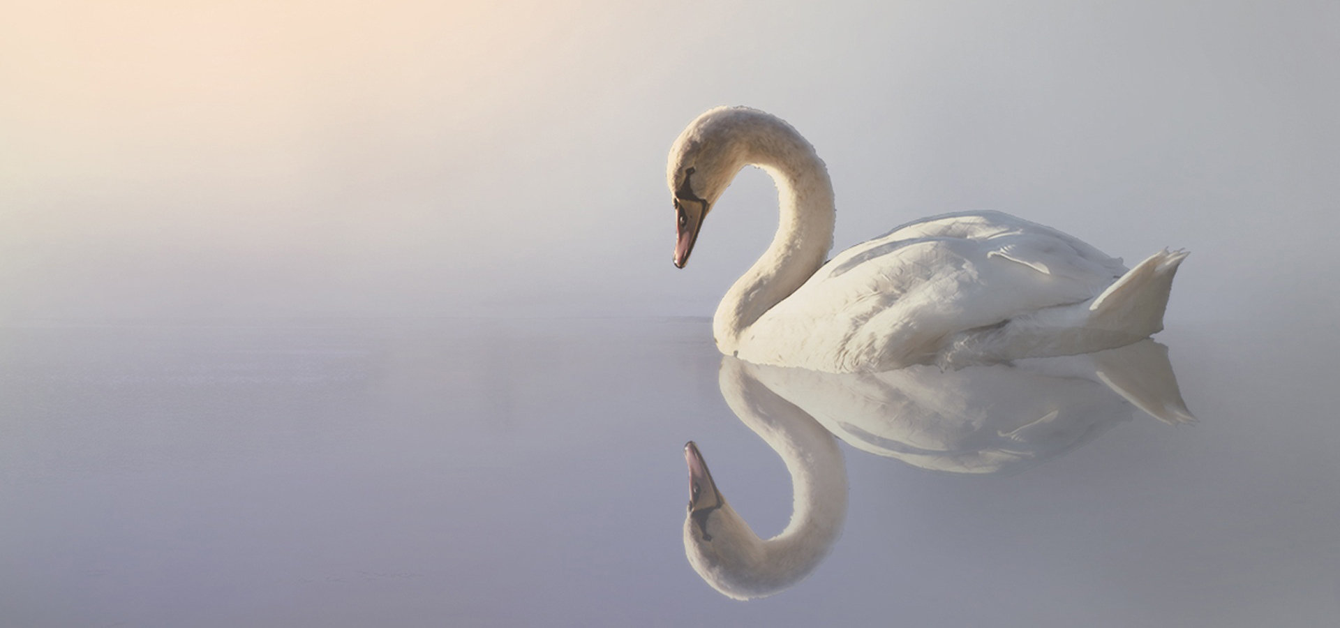 Schwan betrachtet sich im Wasser, Schematherapie, Achtsamkeit, Selbstmitgefühl